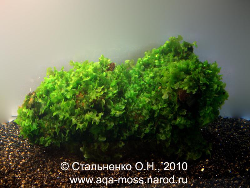 """,""aqa-moss.narod.ru"